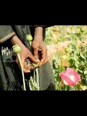 إسلام أون لاين- أحمد عطا